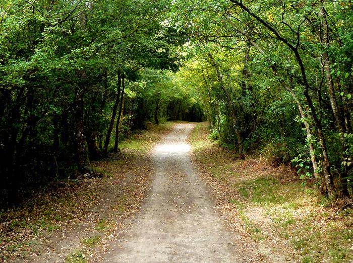camino_sostenibilidad
